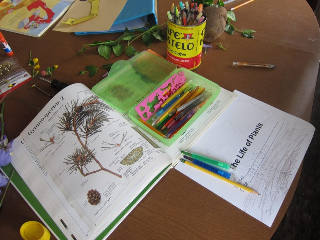 The book is Dorling Kindersley's The Visual Dictionary of Plants.