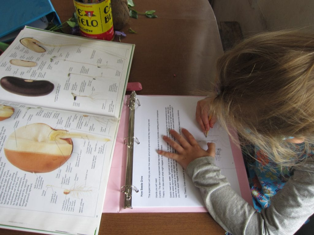 Drawing her hypothesis