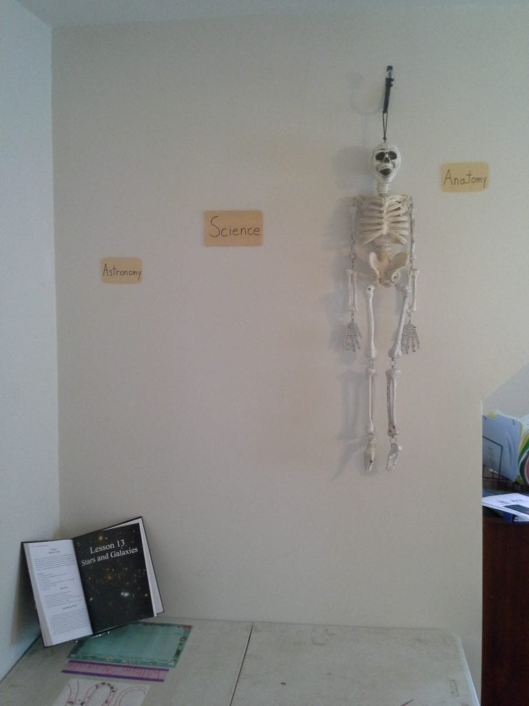 Every Classroom Needs A Skeleton!